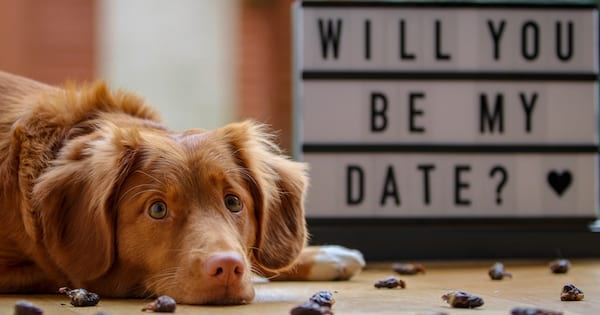 wedding date instagram captions, will you be my date, relationships, science & tech, Dog lying on the ground next to a sign that reads